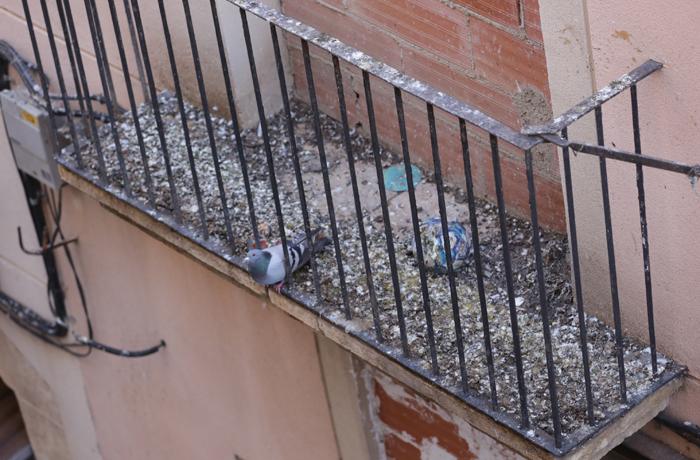 Sistemas anti palomas en Tarragona